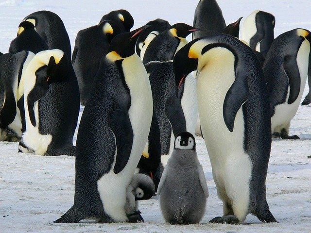 Hannu Etelämantereelle 🤩